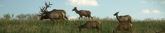 Elk Research Council